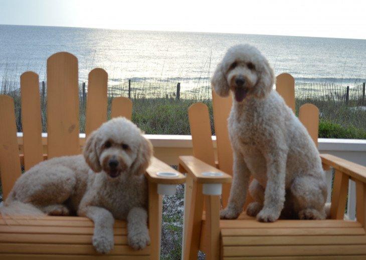 Pet Friendly Condo and Beach