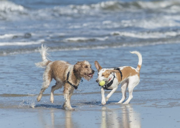 Your Furry Babies Need a Vacation Too