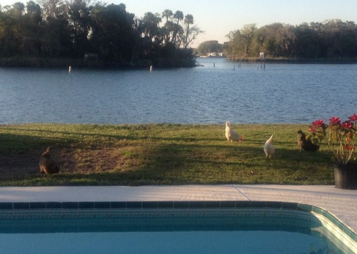 Fish from the dock, paddle board, kayak, swim with manatees, relax by the pool! #12