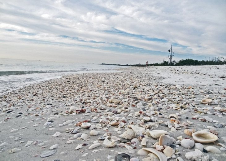 Shells in Lover's Key state park