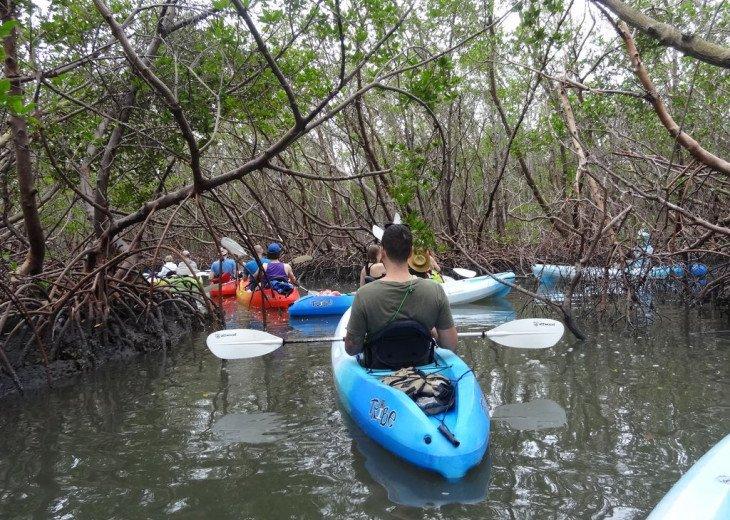 Mangrove kayak tours