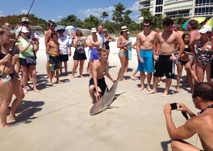 Sport fishing - sand shark