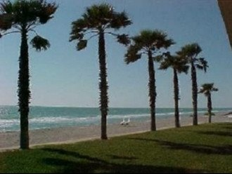 Signature Beachcomber Palm Trees