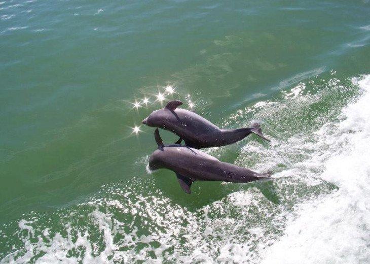 WINDSTAR BEACH & GOLF VILLA #17