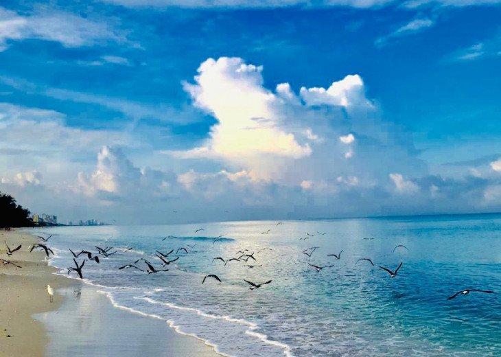 !!VANDERBILT BEACH!! BEACH, OCEAN, SUN & FUN, LIFE & LEISURE #28