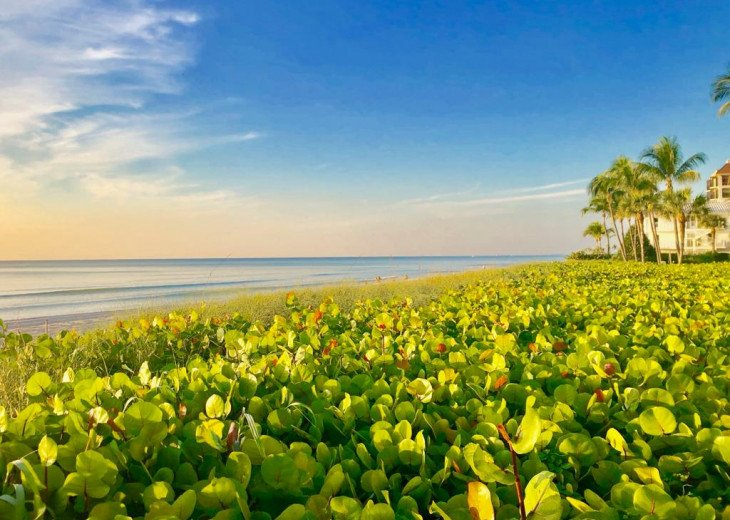 !!VANDERBILT BEACH!! BEACH, OCEAN, SUN & FUN, LIFE & LEISURE #21