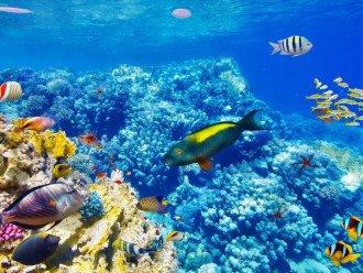Snorkel the reef!