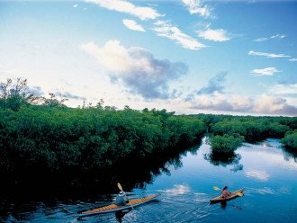 Enjoy kayaking in the mangroves or in the canal!