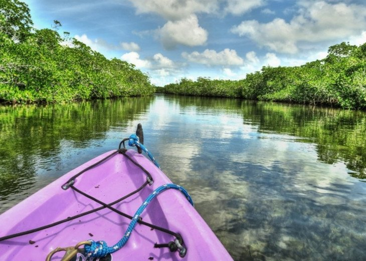 Kayak the mangroves!