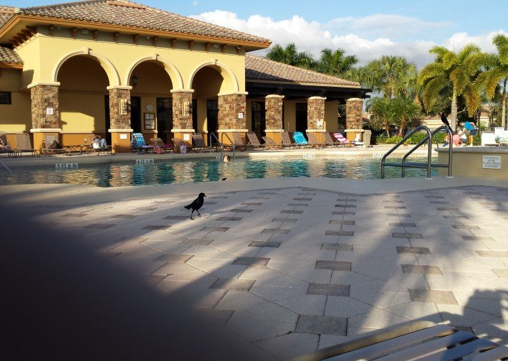 Swimming Pool at club house