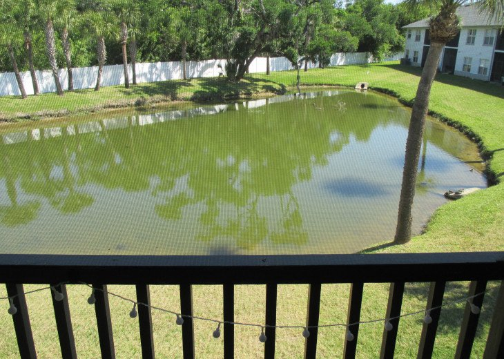pond with turtles, fish, visiting kingfishers, and sometimes eagles & ospreys