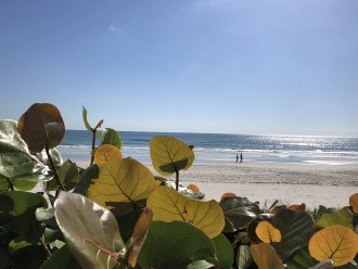 Quiet Ponce Inlet Beachfront Condo - From $800wk!!! #1