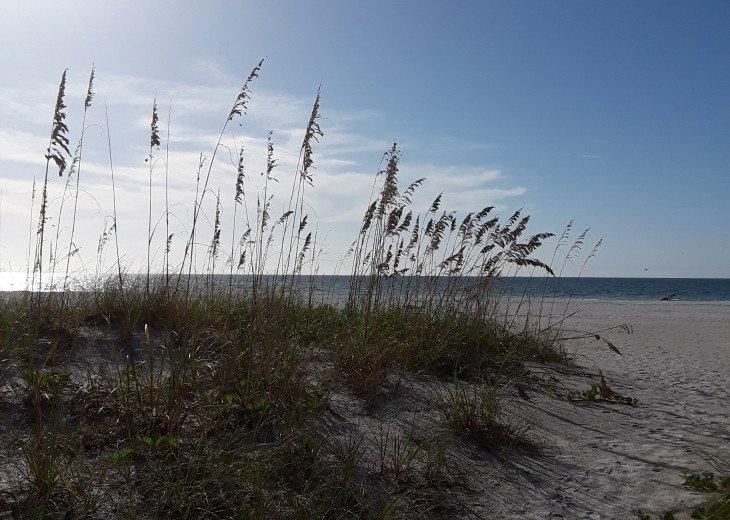 Clearwater Sugar Beach #15