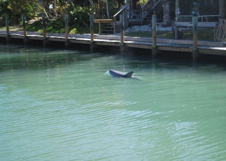 Dolphins in our canal