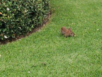 one beautiful bunny