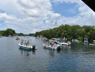 Homosassa river the Fishbowl