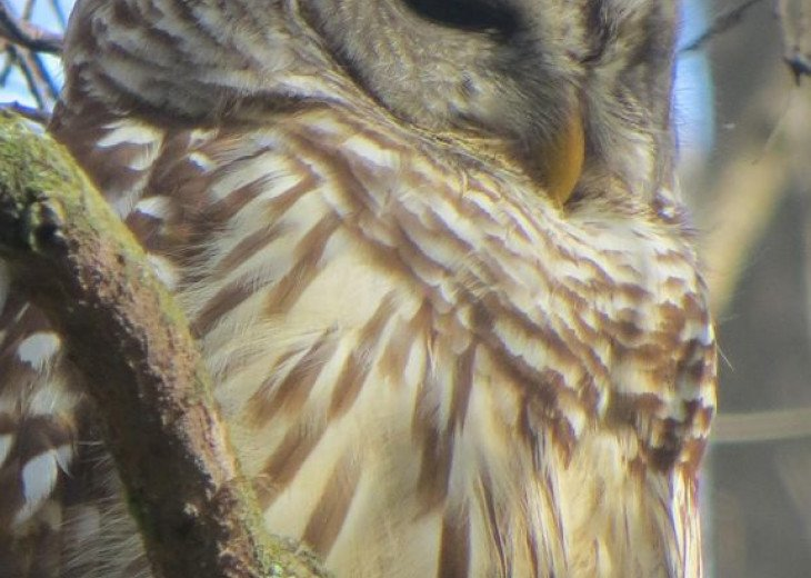 Owl at Corkscrew Audubon Sanctuary - Naples Vacation Rental