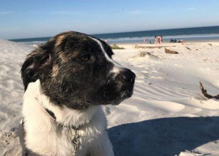 Kody my dog loves the beach closeby