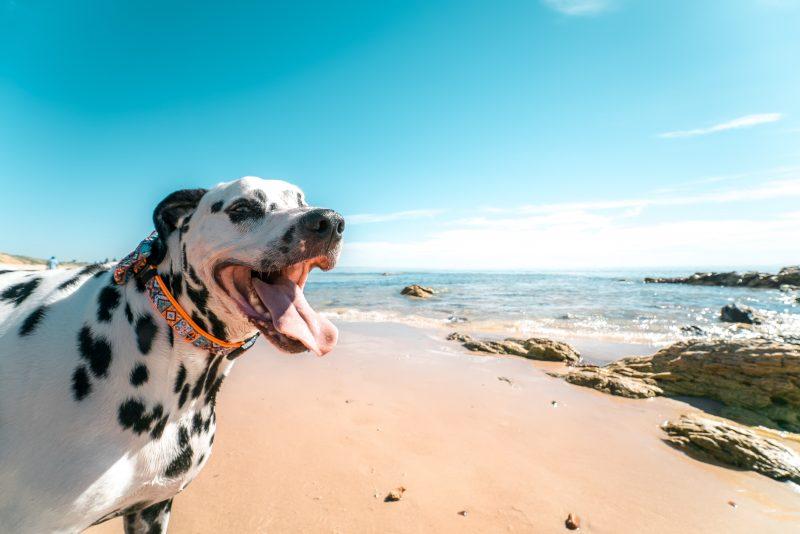 d8d232a01077c 5 Best Dog-Friendly Beaches in Florida - Florida Rentals Blog